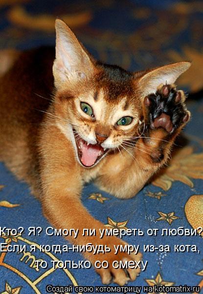 Котоматрица: Если я когда-нибудь умру из-за кота, то только со смеху Кто? Я? Смогу ли умереть от любви?