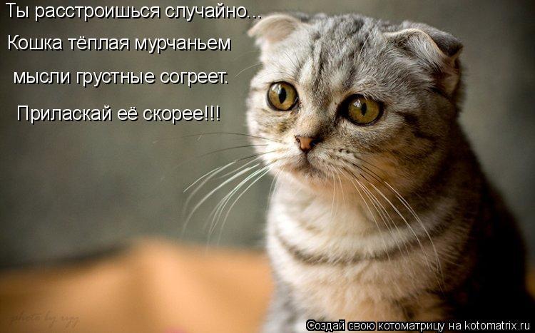 Котоматрица: Ты расстроишься случайно... Кошка тёплая мурчаньем мысли грустные согреет. Приласкай её скорее!!!