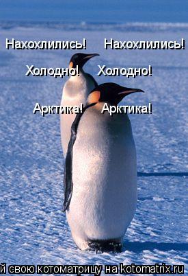 Котоматрица: Нахохлились!     Нахохлились! Холодно!     Холодно! Арктика!     Арктика!