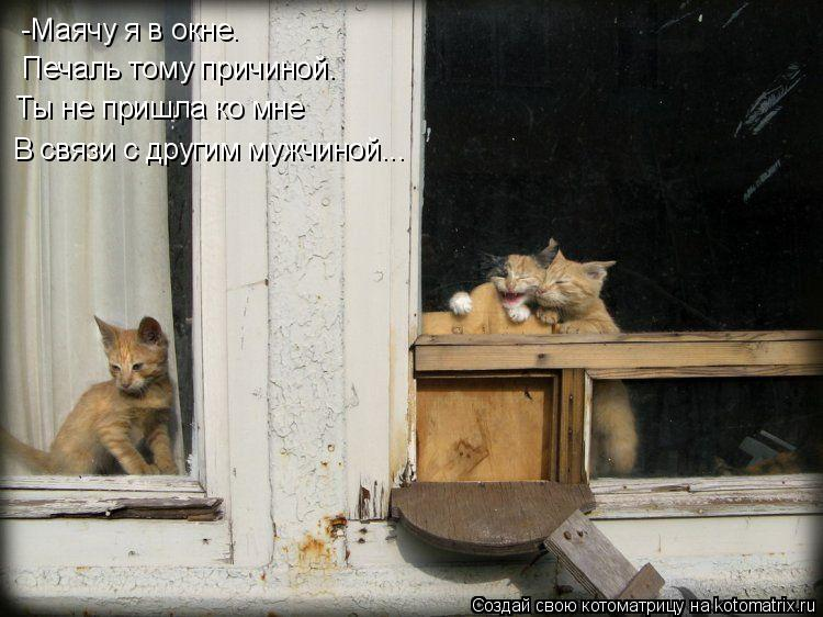 Котоматрица: -Маячу я в окне. Печаль тому причиной. Ты не пришла ко мне В связи с другим мужчиной...