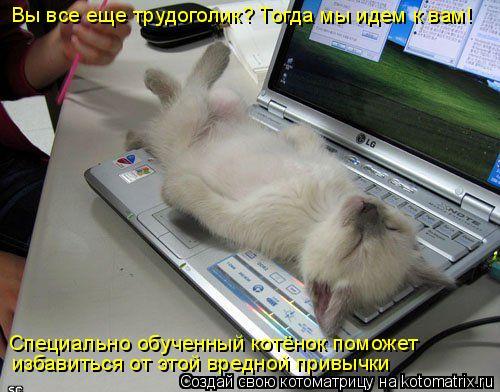 Котоматрица: Вы все еще трудоголик? Тогда мы идем к вам! Специально обученный котёнок поможет  избавиться от этой вредной привычки