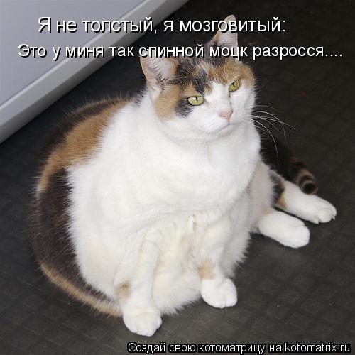Котоматрица: Я не толстый, я мозговитый: Это у миня так спинной моцк разросся....