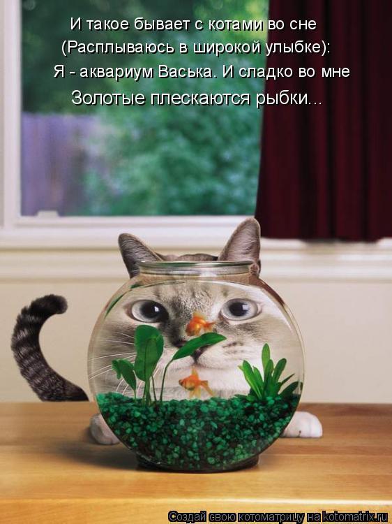 Котоматрица: И такое бывает с котами во сне (Расплываюсь в широкой улыбке): Я - аквариум Васька. И сладко во мне Золотые плескаются рыбки...