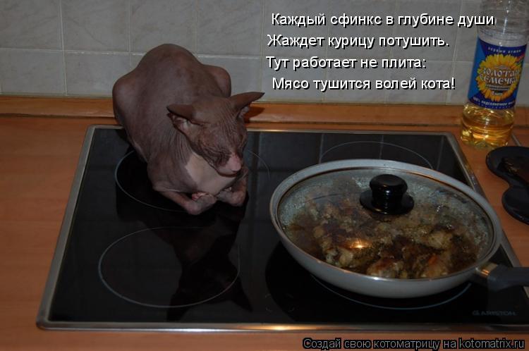 Котоматрица: Каждый сфинкс в глубине души Жаждет курицу потушить. Тут работает не плита: Мясо тушится волей кота!
