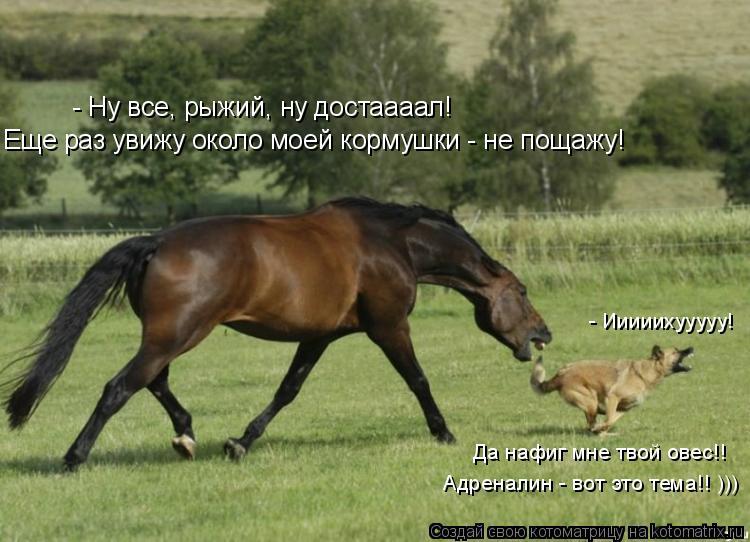 Котоматрица: - Ну все, рыжий, ну достаааал! Еще раз увижу около моей кормушки - не пощажу! - Ииииихууууу! Да нафиг мне твой овес!! Адреналин - вот это тема!! )))