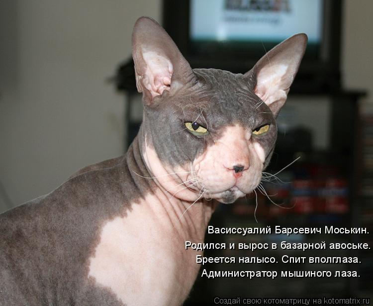 Котоматрица: Васиссуалий Барсевич Моськин. Родился и вырос в базарной авоське. Бреется налысо. Спит вполглаза. Администратор мышиного лаза.