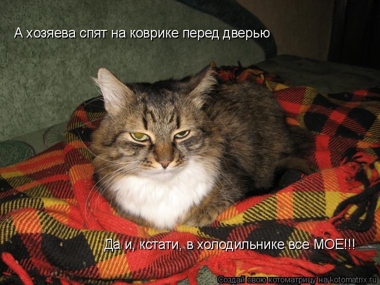 Котоматрица: А хозяева спят на коврике перед дверью Да и, кстати, в холодильнике все МОЕ!!!
