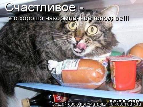 Котоматрица: Счастливое -  это хорошо накормленное голодное!!!