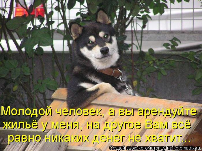 Котоматрица: Молодой человек, а вы арендуйте  жильё у меня, на другое Вам всё  равно никаких денег не хватит...