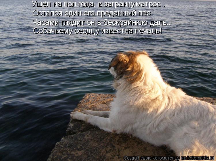 Котоматрица: Ушёл на пол года, в загранку,матрос.. Остался один его преданный пёс.. Часами глядит он в бескрайнюю даль.. Собачьему сердцу известна печаль!