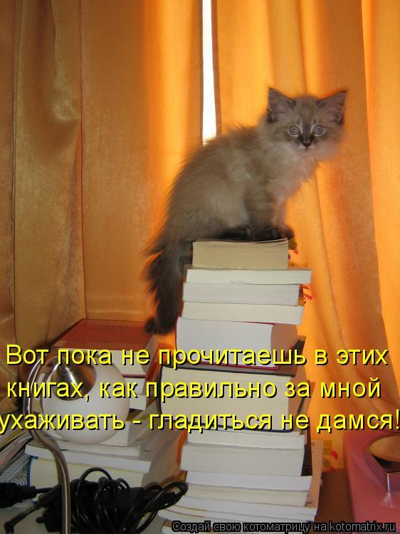 Котоматрица: Вот пока не прочитаешь в этих  книгах, как правильно за мной  ухаживать - гладиться не дамся!