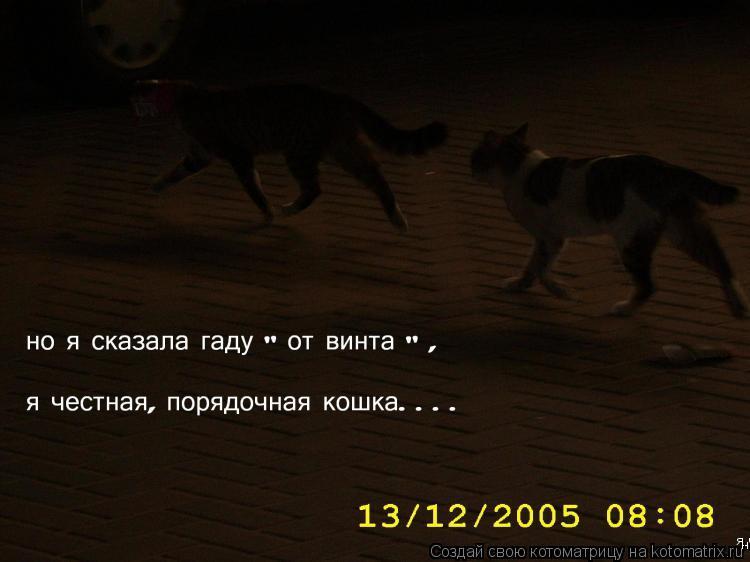 "Котоматрица: но я сказала гаду ""от винта"" , я честная,порядочная кошка...."