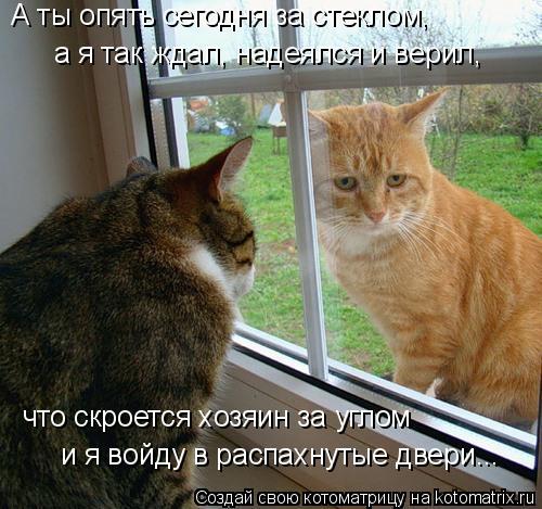 Котоматрица: А ты опять сегодня за стеклом, а я так ждал, надеялся и верил, что скроется хозяин за углом и я войду в распахнутые двери...