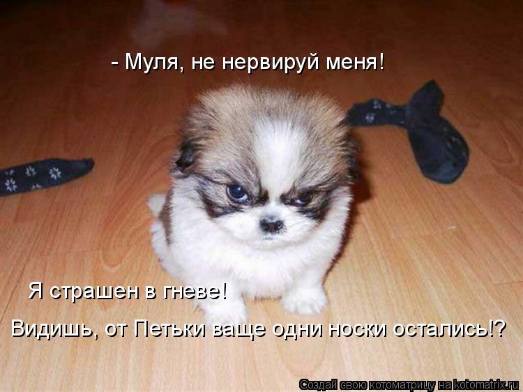 Котоматрица: - Муля, не нервируй меня! Я страшен в гневе!  Видишь, от Петьки ваще одни носки остались!?