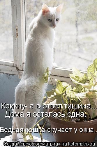 Котоматрица: Крикну- а в ответ тишина... Дома я осталась одна. Бедная кошка скучает у окна...