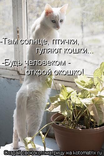 Котоматрица: -Там солнце, птички,  гуляют кошки... -Будь человеком -  открой окошко!