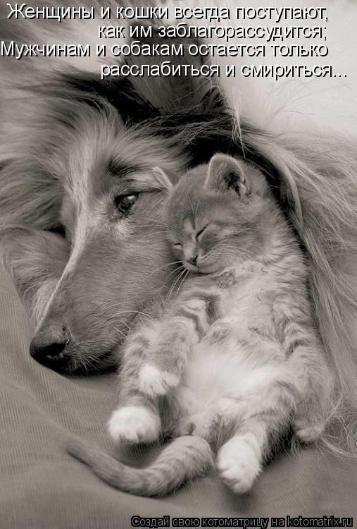 Котоматрица: Женщины и кошки всегда поступают, как им заблагорассудится; Мужчинам и собакам остается только  расслабиться и смириться...
