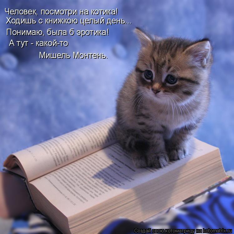 Котоматрица: Человек, посмотри на котика! Ходишь с книжкою целый день... Понимаю, была б эротика! А тут - какой-то Мишель Монтень.