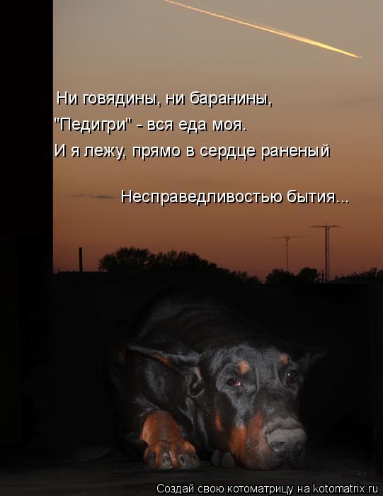 """Котоматрица: Ни говядины, ни баранины, """"Педигри"""" - вся еда моя. И я лежу, прямо в сердце раненый Несправедливостью бытия..."""