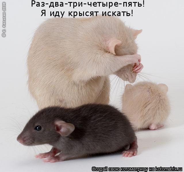 Котоматрица: Раз-два-три-четыре-пять!  Я иду крысят искать!