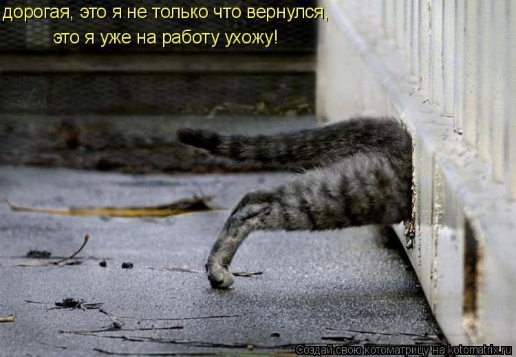 Котоматрица: дорогая, это я не только что вернулся,  это я уже на работу ухожу!