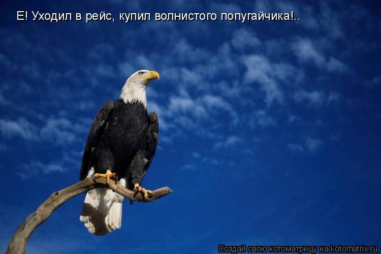 Котоматрица: Е! Уходил в рейс, купил волнистого попугайчика!..