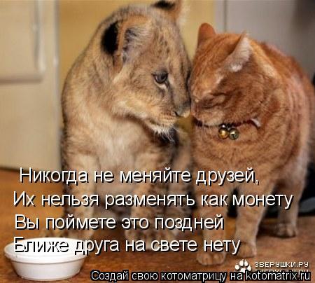 Котоматрица: Никогда не меняйте друзей,   Их нельзя разменять как монету   Вы поймете это поздней    Ближе друга на свете нету