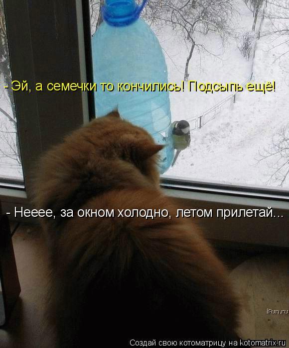 Котоматрица: - Эй, а семечки то кончились! Подсыпь ещё! - Нееее, за окном холодно, летом прилетай...