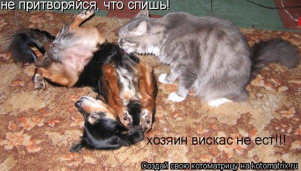 Котоматрица: не притворяйся, что спишь! хозяин вискас не ест!!!