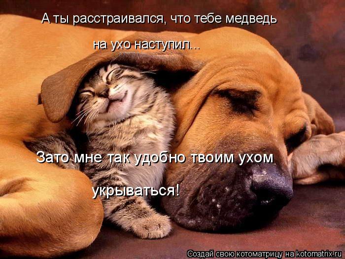Котоматрица: А ты расстраивался, что тебе медведь на ухо наступил... Зато мне так удобно твоим ухом  укрываться!
