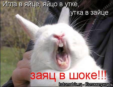 Котоматрица: Игла в яйце, яйцо в утке,  утка в зайце заяц в шоке!!!