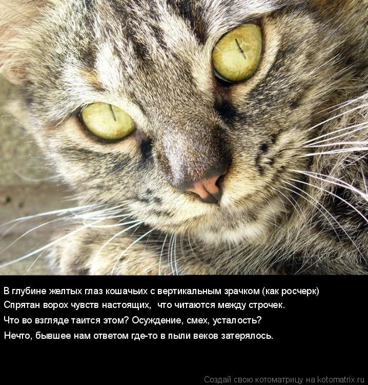 Котоматрица: В глубине желтых глаз кошачьих с вертикальным зрачком (как росчерк)  Спрятан ворох чувств настоящих,  что читаются между строчек.  Что во взг