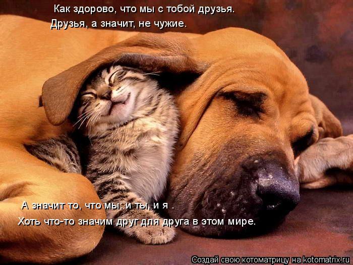 Котоматрица: Как здорово, что мы с тобой друзья. Друзья, а значит, не чужие. А значит то, что мы: и ты, и я – Хоть что-то значим друг для друга в этом мире.