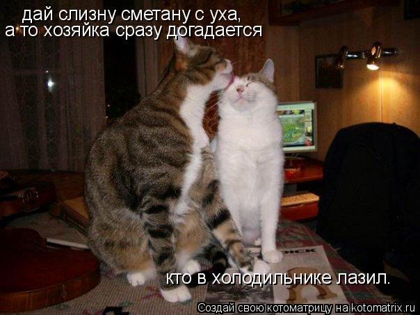 Котоматрица: дай слизну сметану с уха а то хозяйка сразу догадается кто в холодильнике лазил. ,