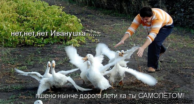 Котоматрица: пшено нынче дорого,лети ка ты САМОЛЕТОМ! нет,нет,нет Иванушка.......