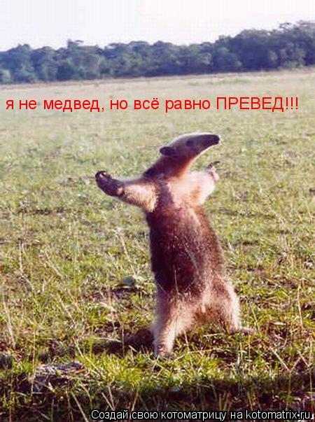 Котоматрица: я не медвед, но всё равно ПРЕВЕД!!!