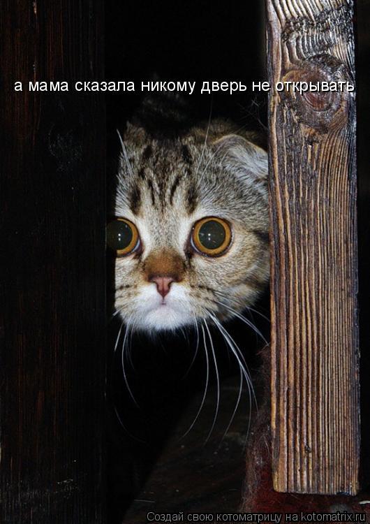 Котоматрица: а мама сказала никому дверь не открывать