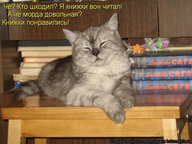 Котоматрица: Че? Кто шкодил? Я книжки вон читал! А че морда довольная? Книжки понравились!