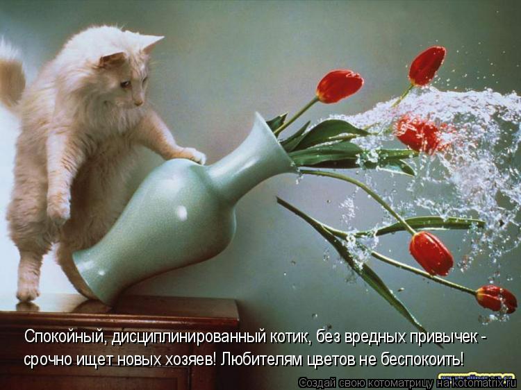 Котоматрица: Спокойный, дисциплинированный котик, без вредных привычек - срочно ищет новых хозяев! Любителям цветов не беспокоить!