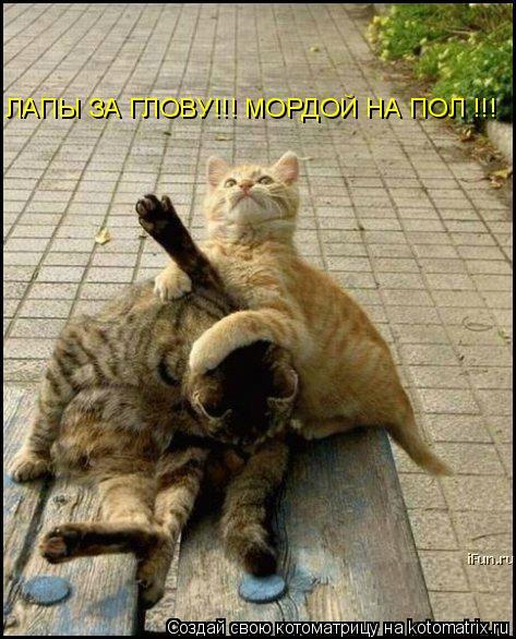 Котоматрица: ЛАПЫ ЗА ГЛОВУ!!! МОРДОЙ НА ПОЛ !!!