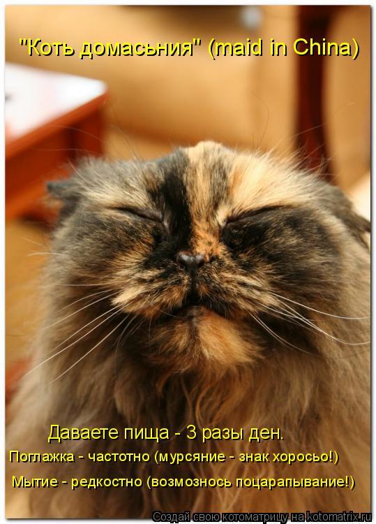 """Котоматрица: Мытие - редкостно (возмознось поцарапывание!) Поглажка - частотно (мурсяние - знак хоросьо!) Даваете пища - 3 разы ден. """"Коть домасьния"""" (maid in Chin"""
