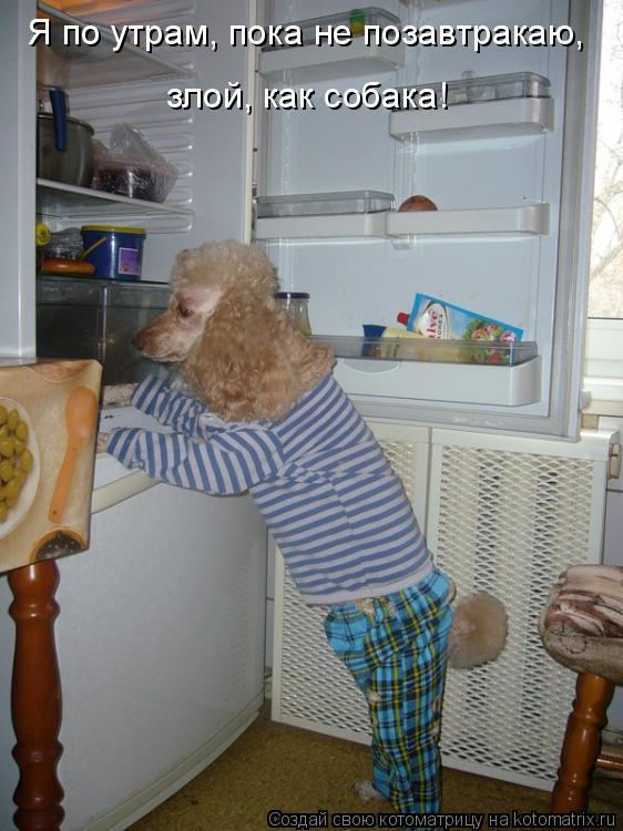 Котоматрица: Я по утрам, пока не позавтракаю, злой, как собака!