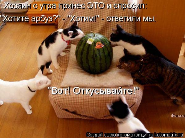"""Котоматрица: Хозяин с утра принес ЭТО и спросил: """"Хотите арбуз?"""" - """"Хотим!"""" - ответили мы. """"Вот! Откусывайте!"""""""
