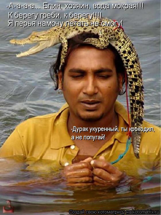 Котоматрица: -А-а-а-а... Блин, хозяин, вода мокрая!!! К берегу греби, к берегу!!!! Я перья намочу летать не смогу! -Дурак укуренный, ты крокодил, а не попугай!