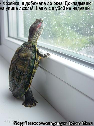 Котоматрица: - Хозяйка, я добежала до окна! Докладываю:  на улице дождь! Шапку с шубой не надевай...
