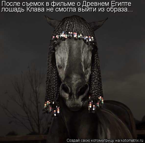 Котоматрица: После съемок в фильме о Древнем Египте лошадь Клава не смогла выйти из образа...