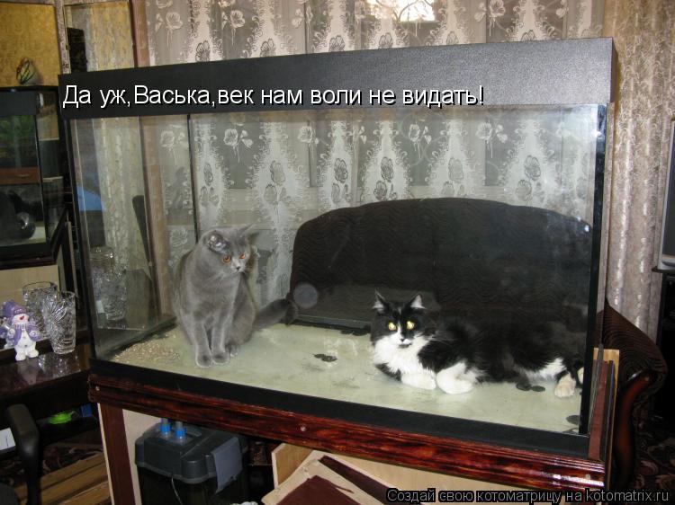 Котоматрица: Да уж,Васька,век нам воли не видать!