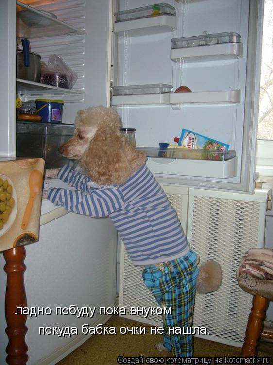 Котоматрица: ладно побуду пока внуком покуда бабка очки не нашла.