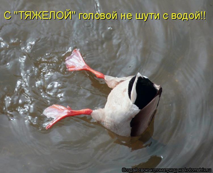 """Котоматрица: С """"ТЯЖЕЛОЙ"""" головой не шути с водой!!"""