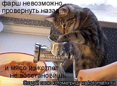 Котоматрица: фарш невозможно провернуть назад... и мясо из котлет не восстановишь...
